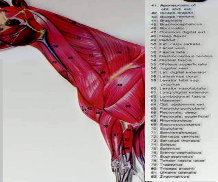 anatom01
